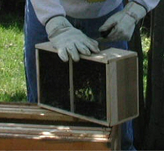 Installing a bee package/nucleus