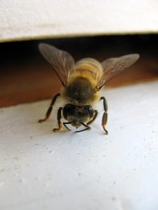 Washboarding bee