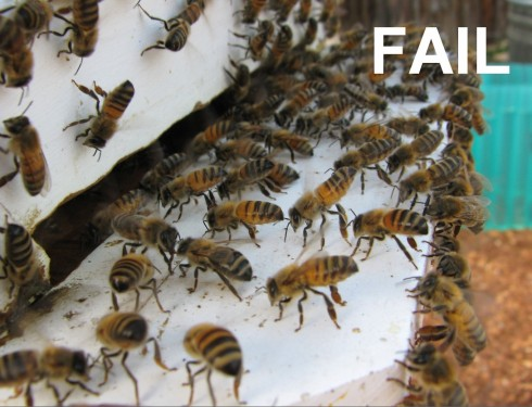 After being unable to convince their queen to swarm, the bees release a pheromone telling everyone to return home