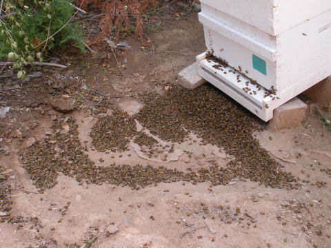 A massive bee kill in Los Ranchos