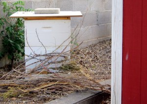 Need to move your bee hive? Here's the lazy way.