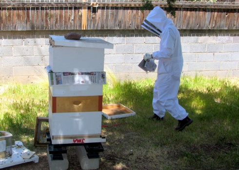 Day 1: Combine hives separated by 1 layer of newspaper