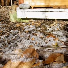My backyard hive in winter